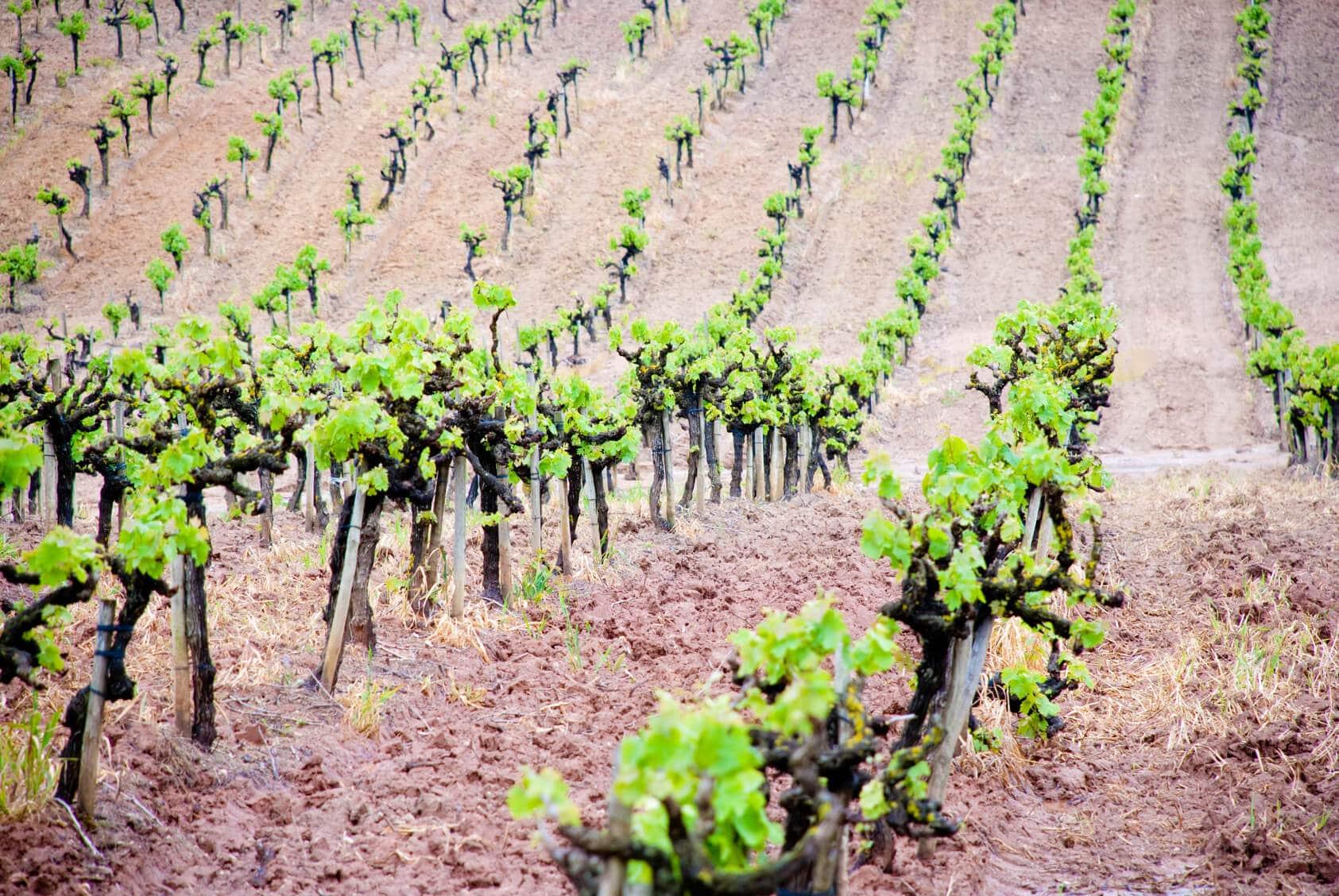 Wine Tours Portugal | Azeitão & Serra da Arrábida